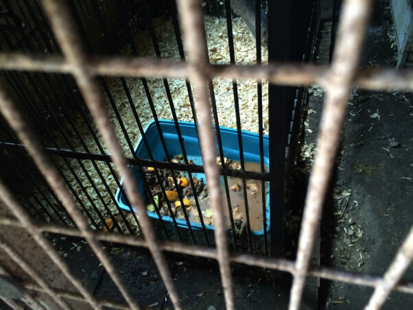2015-06-09_kinkajou-enclosure_Tri-State_Zoo_IMG_3469