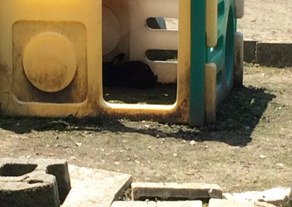 2015-06-09_rabbit_Tri-State_Zoo_IMG_3460