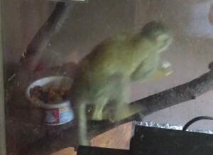 2015-06-09_squirrel-monkey-screenshot_Tri-State_Zoo