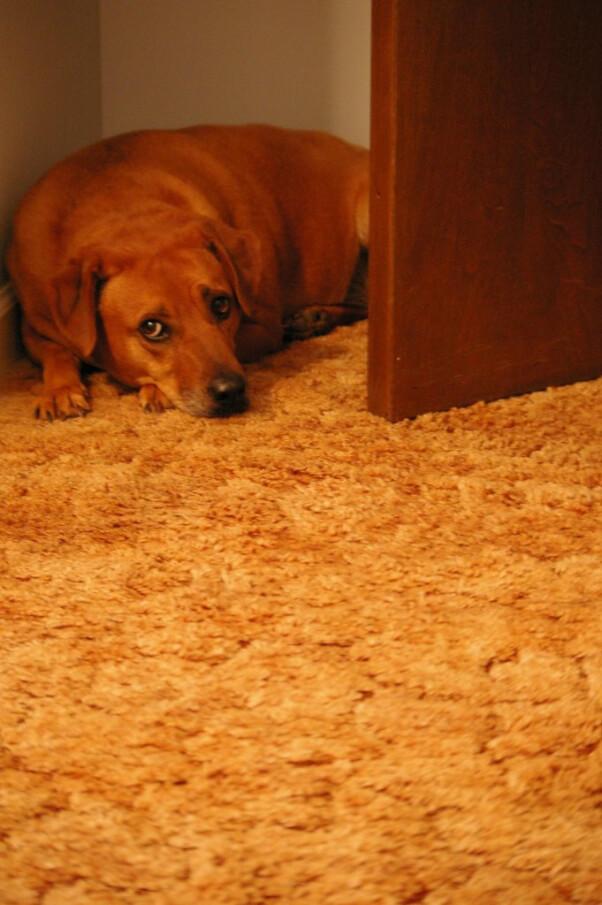 Bailey Scared Dog
