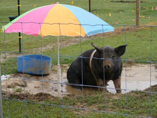 Big Boy Umbrella