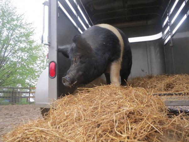 Big boy in trailer