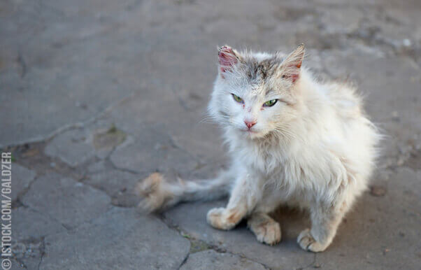 35 'Outdoor Cat' Horror Stories | PETA