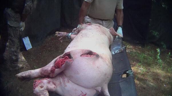 Military Pig 7