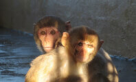 Florida County That Harbors Monkey Breeders Faces Legal Repercussions