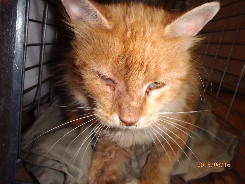 34 Outdoor Cat Horror Stories | Features | PETA