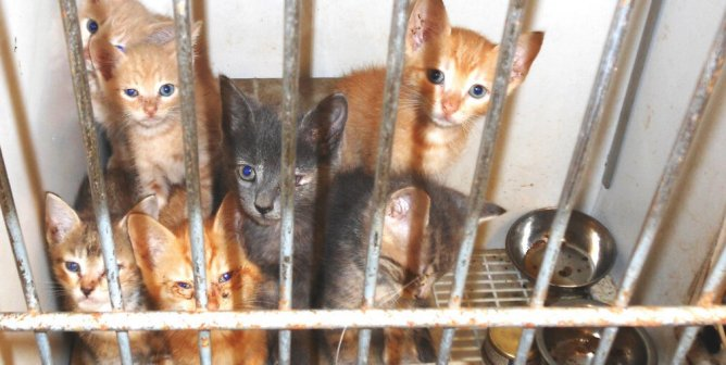 Animal Rights Uncompromised: 'No-Kill' Shelters