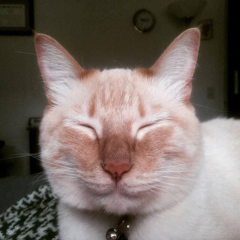 35 'Outdoor Cat' Horror Stories | PETA