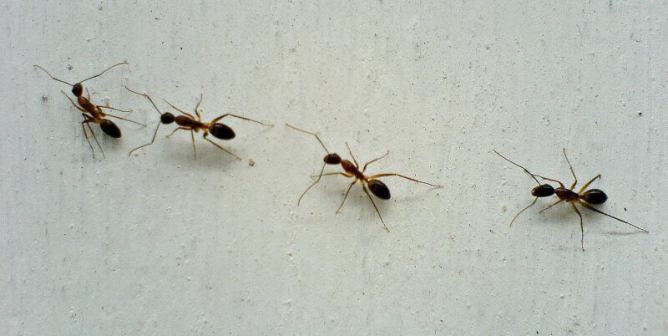 Magnificent Tips For Humane Nontoxic Ant Control Peta Download Free Architecture Designs Scobabritishbridgeorg