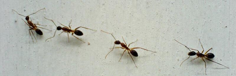Tips for Humane, Nontoxic Ant Control | PETA