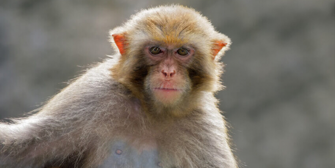 How Do Monkeys End Up in Labs? See the Haunting Photos