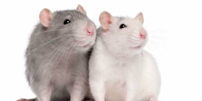 Medical Journal Rejects All Studies Involving Animal Experimentation