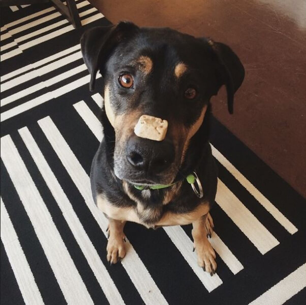 Image result for make dog work for treats