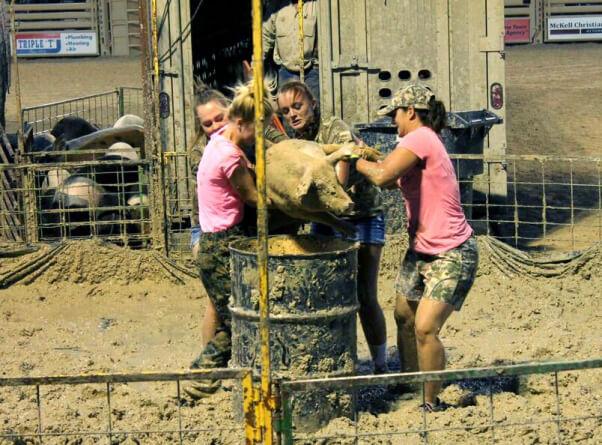 Girls prepare to dump pig into a barrel at pig wrestling event