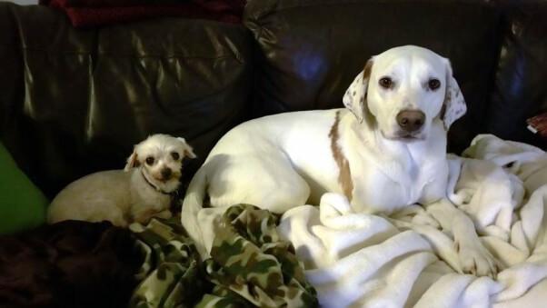 PETA rescue Soupster with friend Douglas