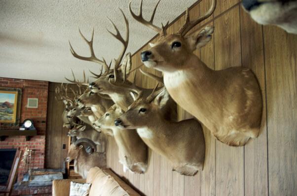 mounted deer heads