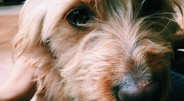 Dogs Suffer From Anxiety, Too