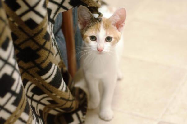 Kittens_07.07.15_08