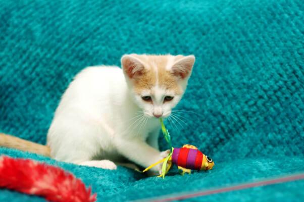 Kittens_07.07.15_12