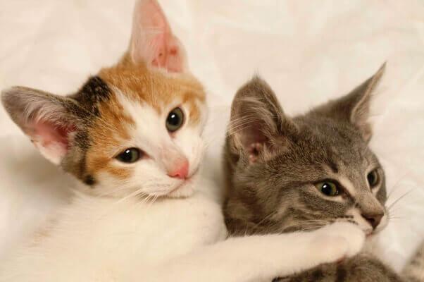 Kittens_07.07.15_17