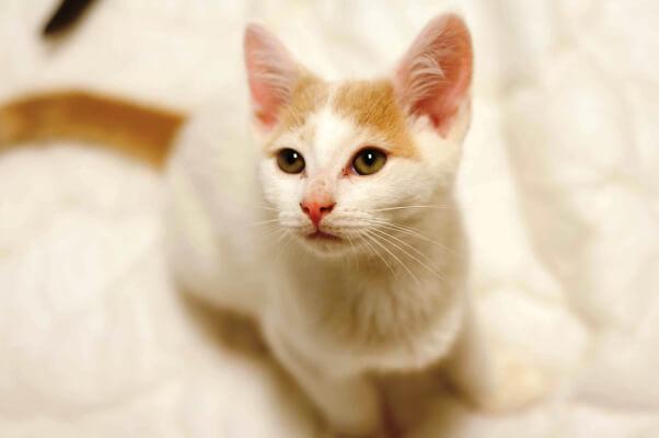 Kittens_07.07.15_18