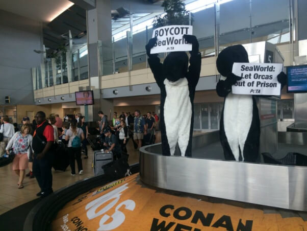 'ORCAS' TAKE OVER BAGGAGE CLAIM TO PROTEST SEAWORLD CRUELTY3