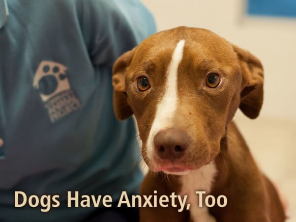 PETA-social-dogs-have-anxiety-too-v2
