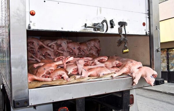 Pigs on Truck