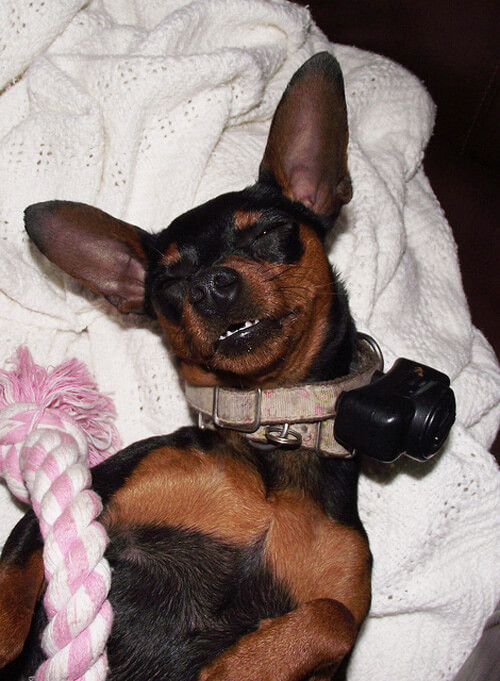 Dog Shock Collar For Aggression