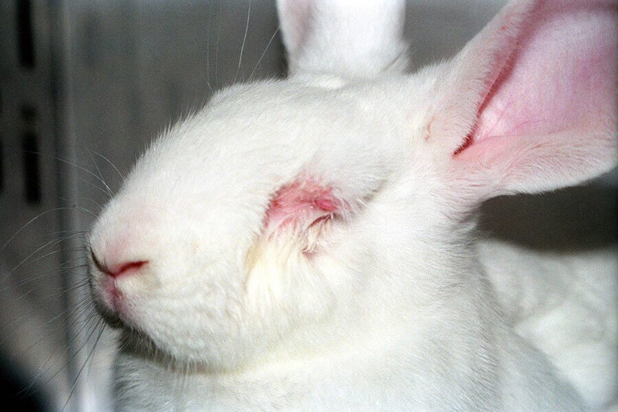 bunny used for animal testing