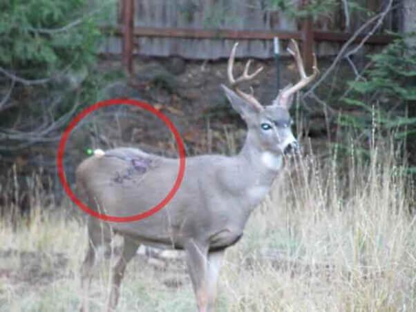 hunting-deer-with-arrow
