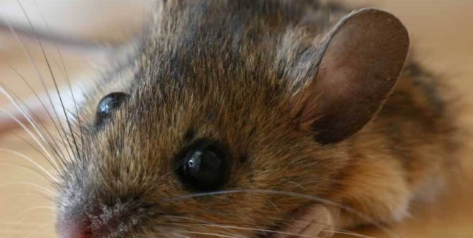 Little Boy Enraged at Dad for Killing a Mouse Tells Him What's What