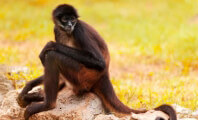 Monkey Screams, Struggles as Group Promotes Its 'Humane' Zoo Standards