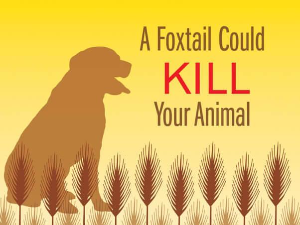 peta-living-foxtail-shareable-v3