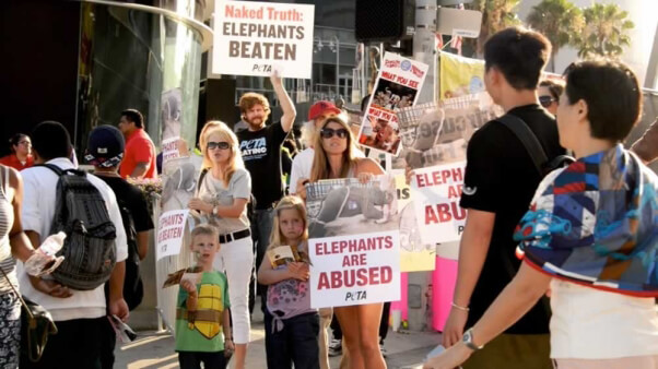 Ringling Bros protest at Staples Center