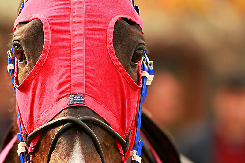 should the racing industry be forced to use biofuels Study why the racing industry should be forced to use biofuels flashcards play games, take quizzes, print and more with easy notecards.