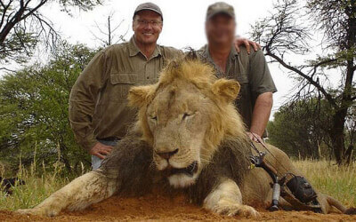 Walter Palmer smiles over the corpse of another animal, who, like Cecil, wanted only to be left in peace.