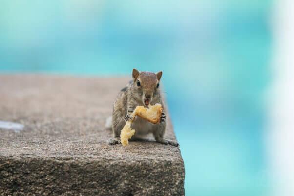 Squirrel Swimming Pool