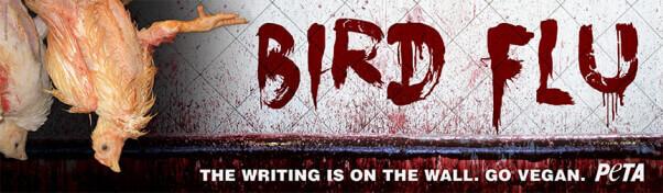 Bird Flu: The Writing Is on the Wall