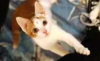 Snip 'Kitten Season' In the Bud This Spring