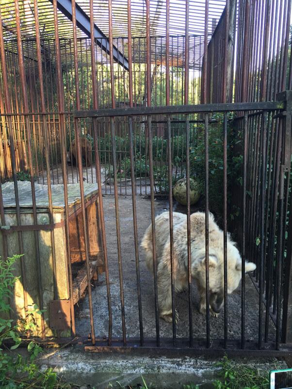 Fifi PA Bear rescue