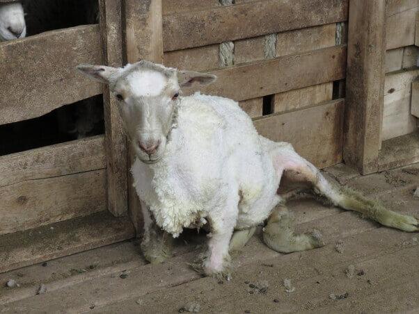 Wool 6 EDIT