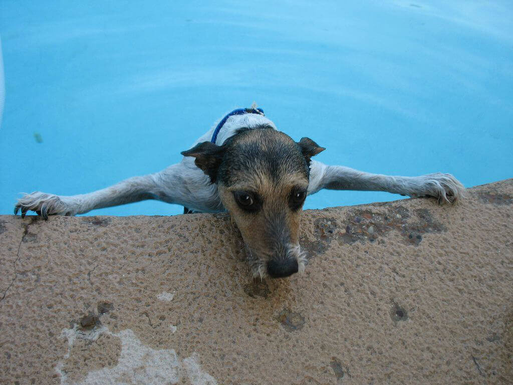 animal pool safety how to prevent an animal from drowning in your