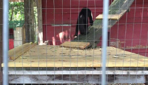Tri State Zoo