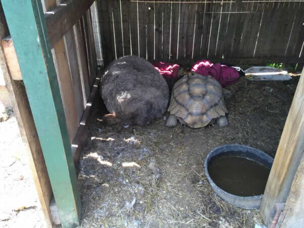 Tortoises at Tri State Zoo