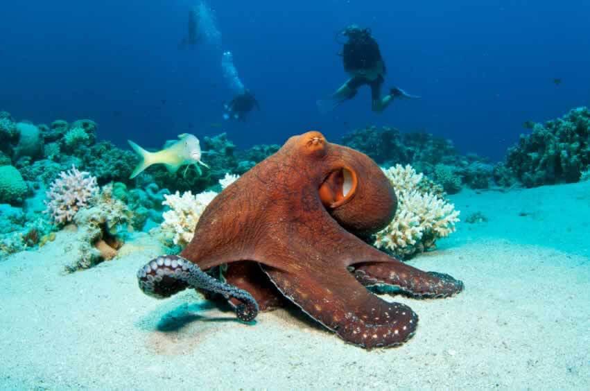 Why Gwyneth Paltrow won't eat Octopus