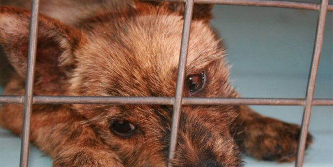 6 Ways Your Class Can Help Homeless Animals