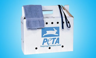 How to Make Your Own Emergency Animal Rescue Kit