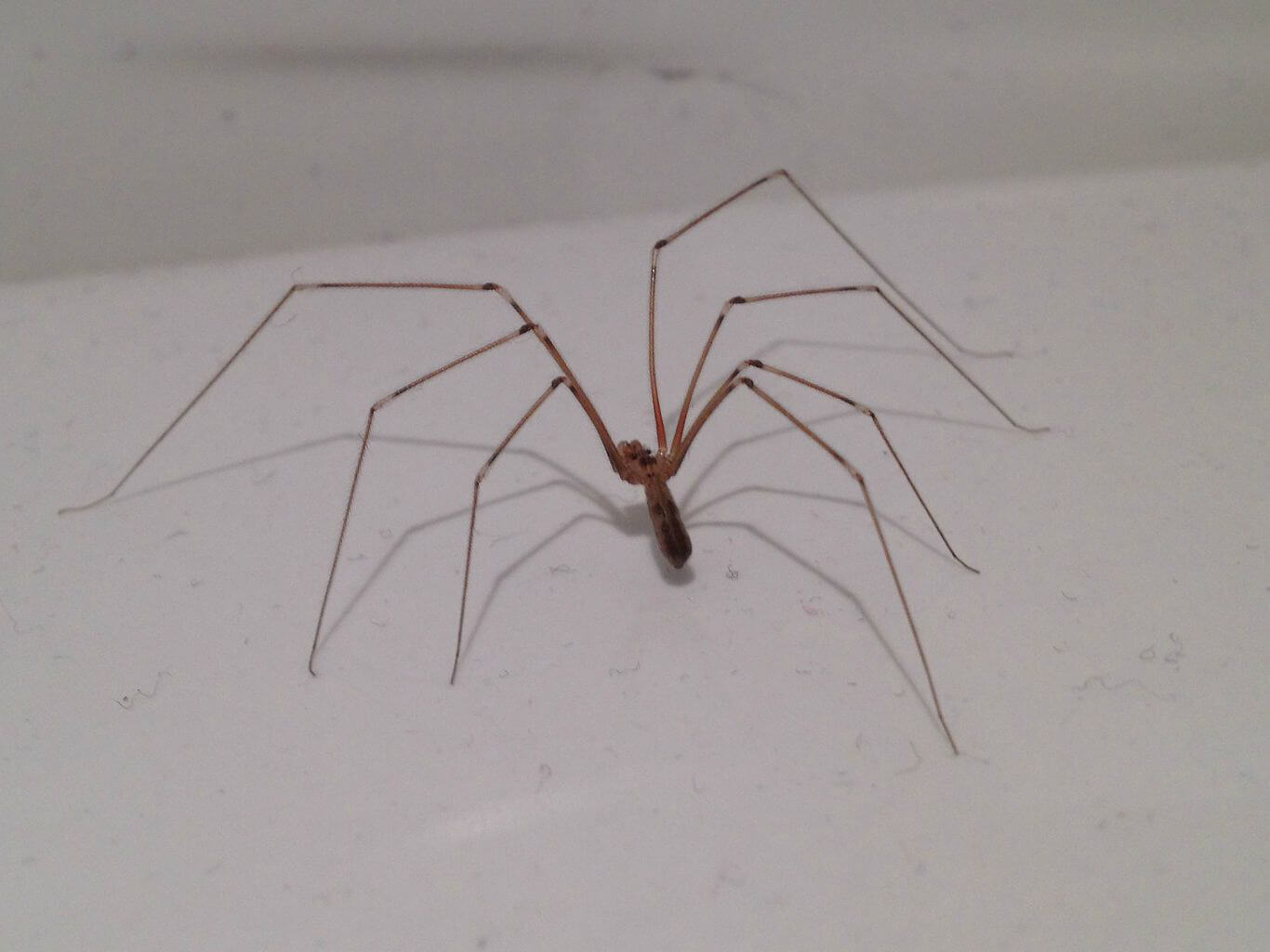 Escort Mr Or Ms Bug Out Of Your House Humanely Peta