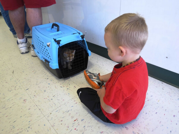 Child with kitten in carrier